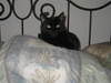 Kittycat_002
